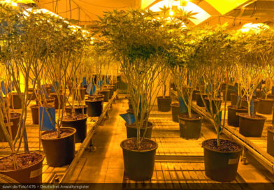 Hanfplantage